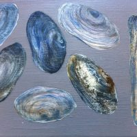Rhossili Shells III | 355mm x 255mm | (sold)